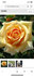 初めてのバラ栽培に挑戦